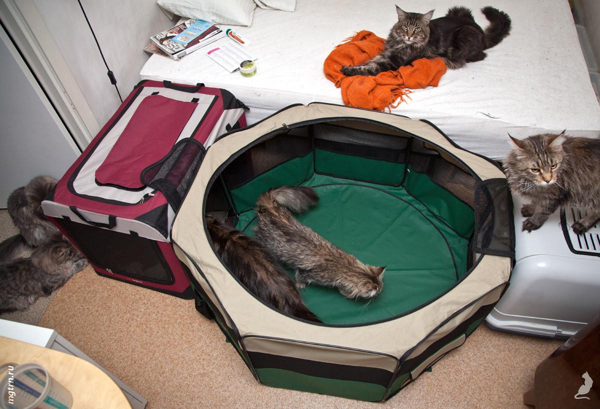 Гнездо для кошки своими руками фото 73